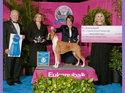 December 17, 2011- AKC/Eukanuba - Best BBE in Working Group 1