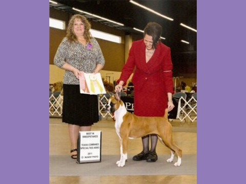 March 2011 - Dallas Boxer Club - Grand Sweepstakes