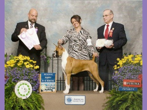 May 2011 - ABC National - Futurity - Reserve 6-9 Puppy