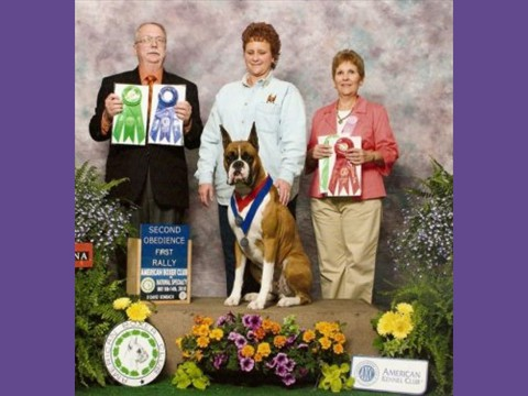 5/08/2010 -- American Boxer Club -- Obedience & Rally
